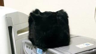 四角い猫?なんだこれ?生きてるの?